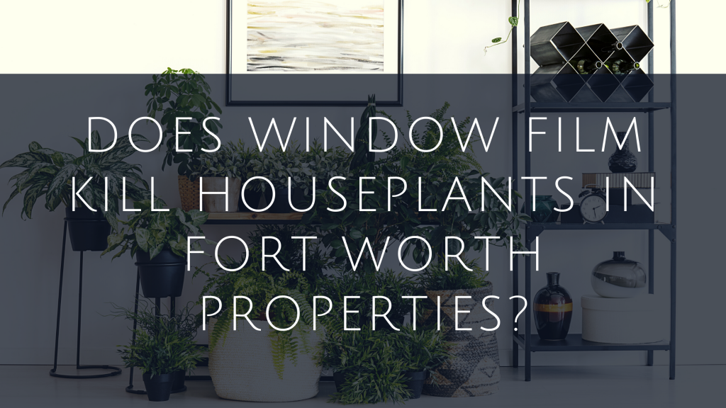 window film houseplants fort worth